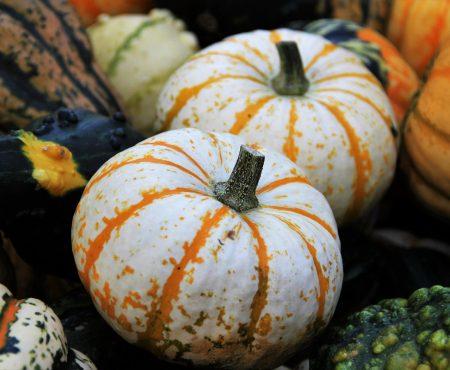 Quiz – warzywa znane i mniej znane