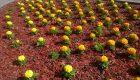 Rośliny cebulowe – gatunki, terminy, głębokość sadzenia