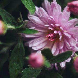 4 rośliny, które kwitną jesienią