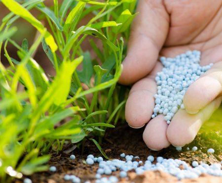 Nawozy jesienne w Twoim ogrodzie – o czym pamiętać?