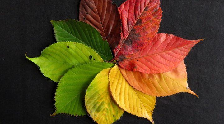 Quiz jesienny