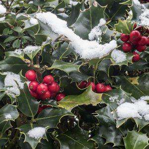 Quiz – rozpoznaj 10 zimozielonych gatunków