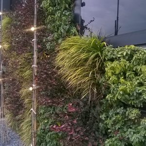 Zielona ściana Arkadii