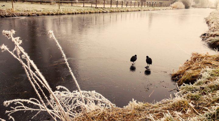 Karmnik dla ptaków: dlaczego warto o nim pomyśleć?