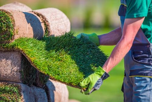 Zakładanie trawnika. Co musisz wiedzieć, zanim kupisz mieszankę traw