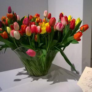 Wystawa tulipanów w Wilanowie – przedsmak wiosny