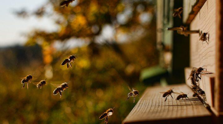 Gmina przyjazna pszczołom. Akcja adresowana do władz lokalnych
