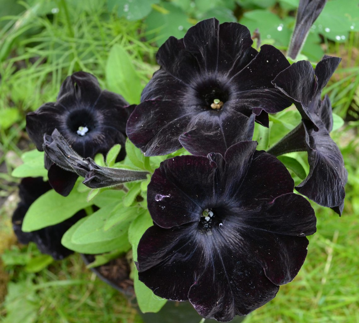 Moda na czarne