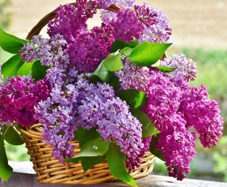 Nasiona i cebule kwiatowe – czym się kierować przy zakupie?
