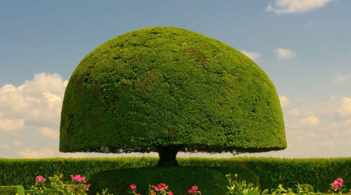 Zielony parasol