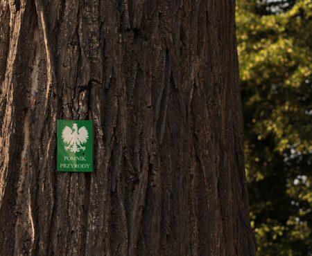 Pomniki przyrody. NIK: gminy niewystarczająco dbają o ochronę przyrody