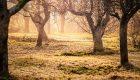 Zieleń to Życie 2018 – Konkurs Roślin Nowości