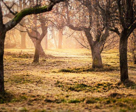 W zachodniej Polsce zwiększa się obszar objęty suszą