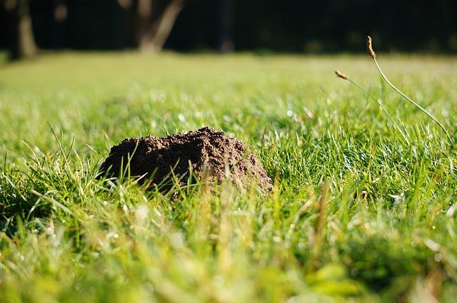 Walka ze szkodnikami ogrodu – pułapka na kreta